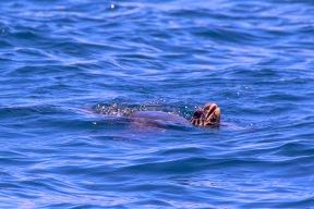 weitere Schildkröte